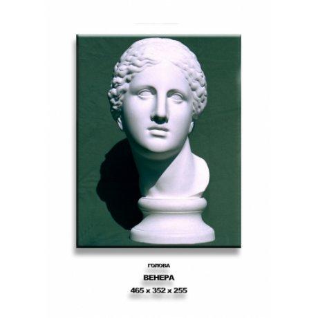 """Гипсовая модель """"Голова Венеры"""""""