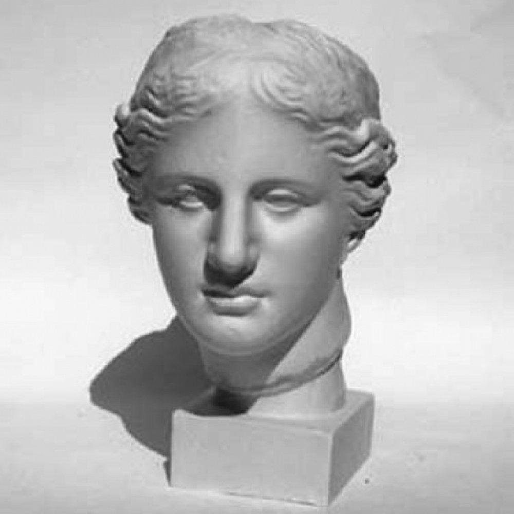 Гипсовая модель голова «Венера Милосская»